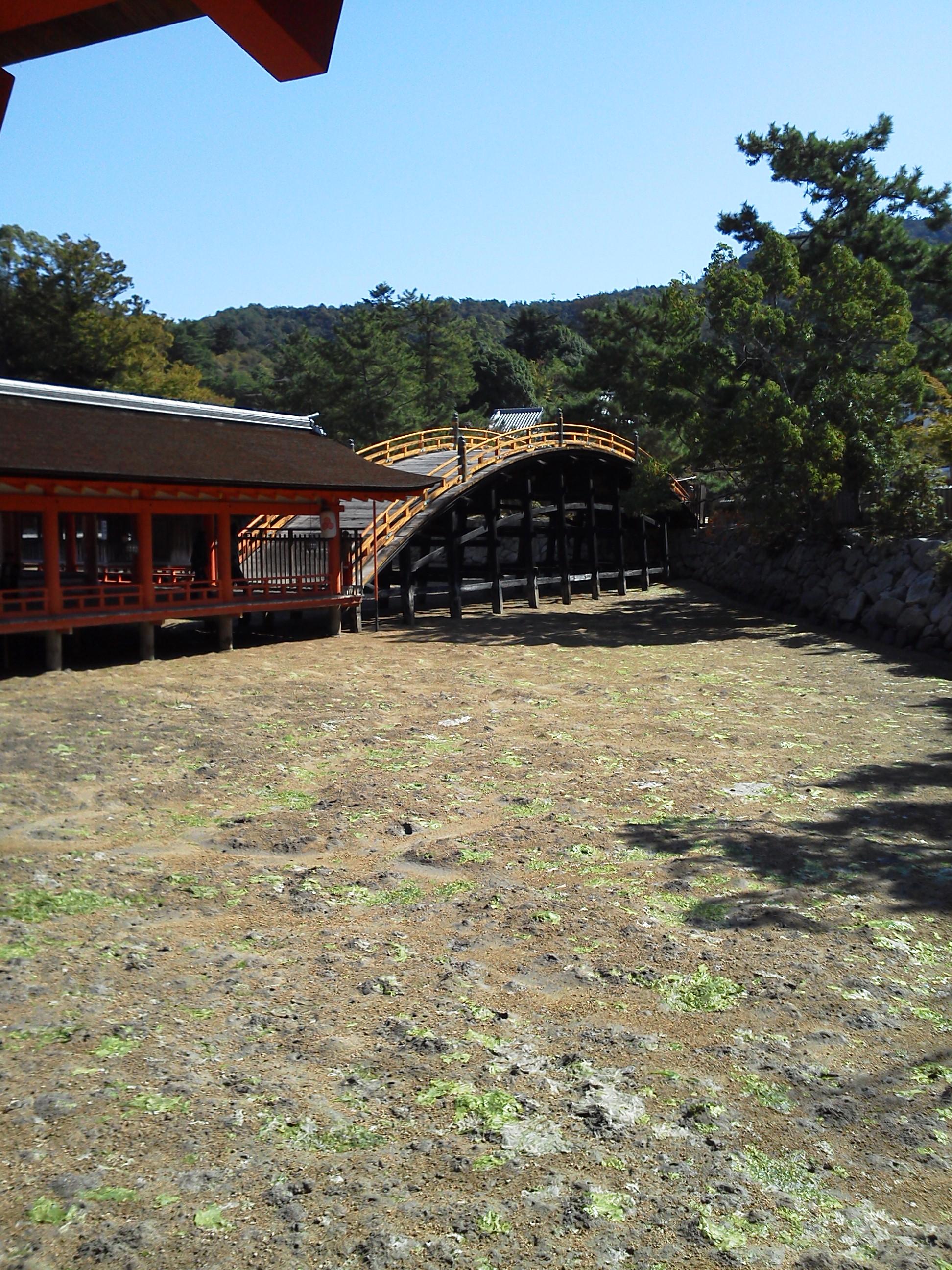 厳島神社 の橋 干潮