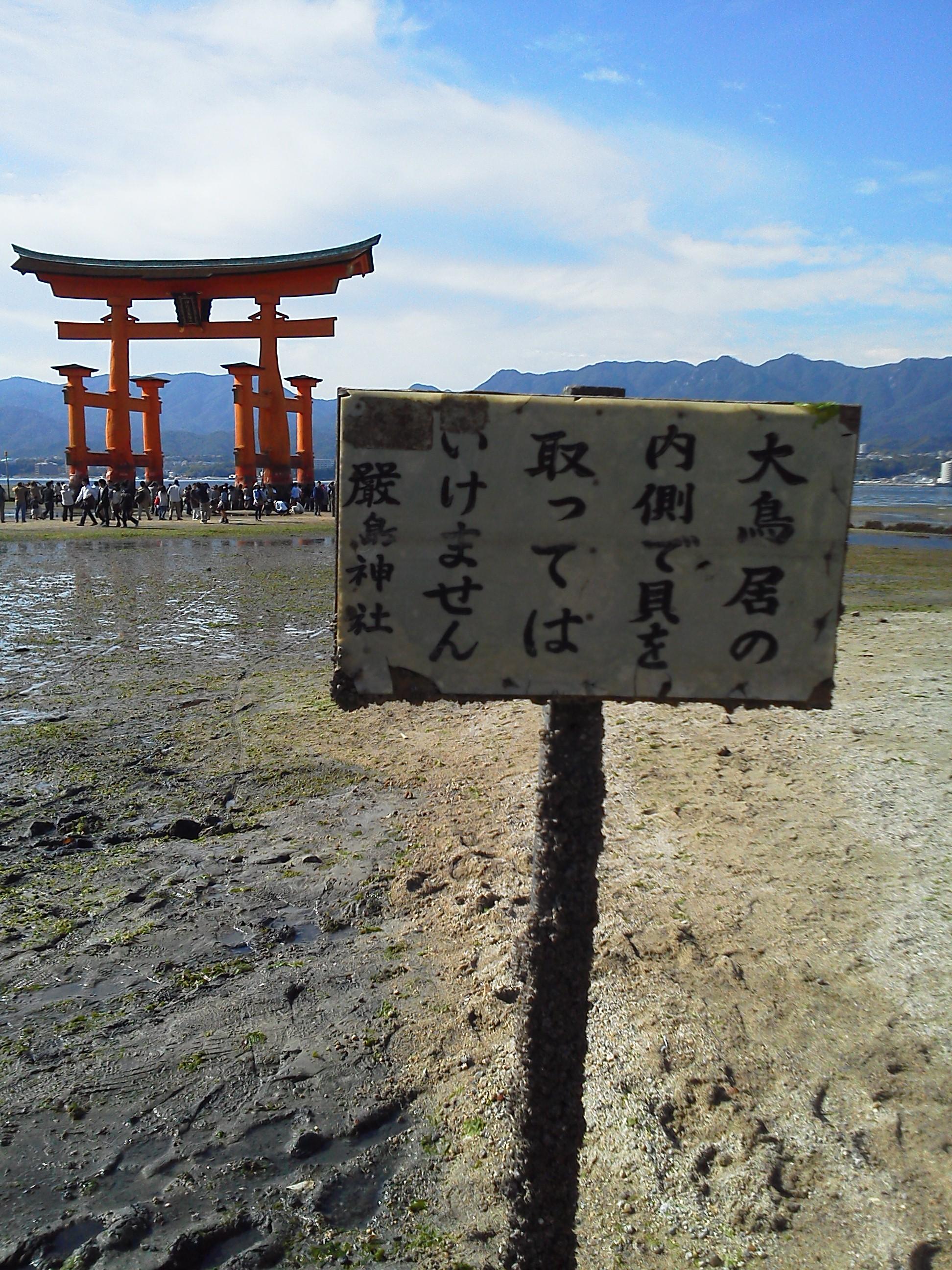 厳島神社 貝をとらないで