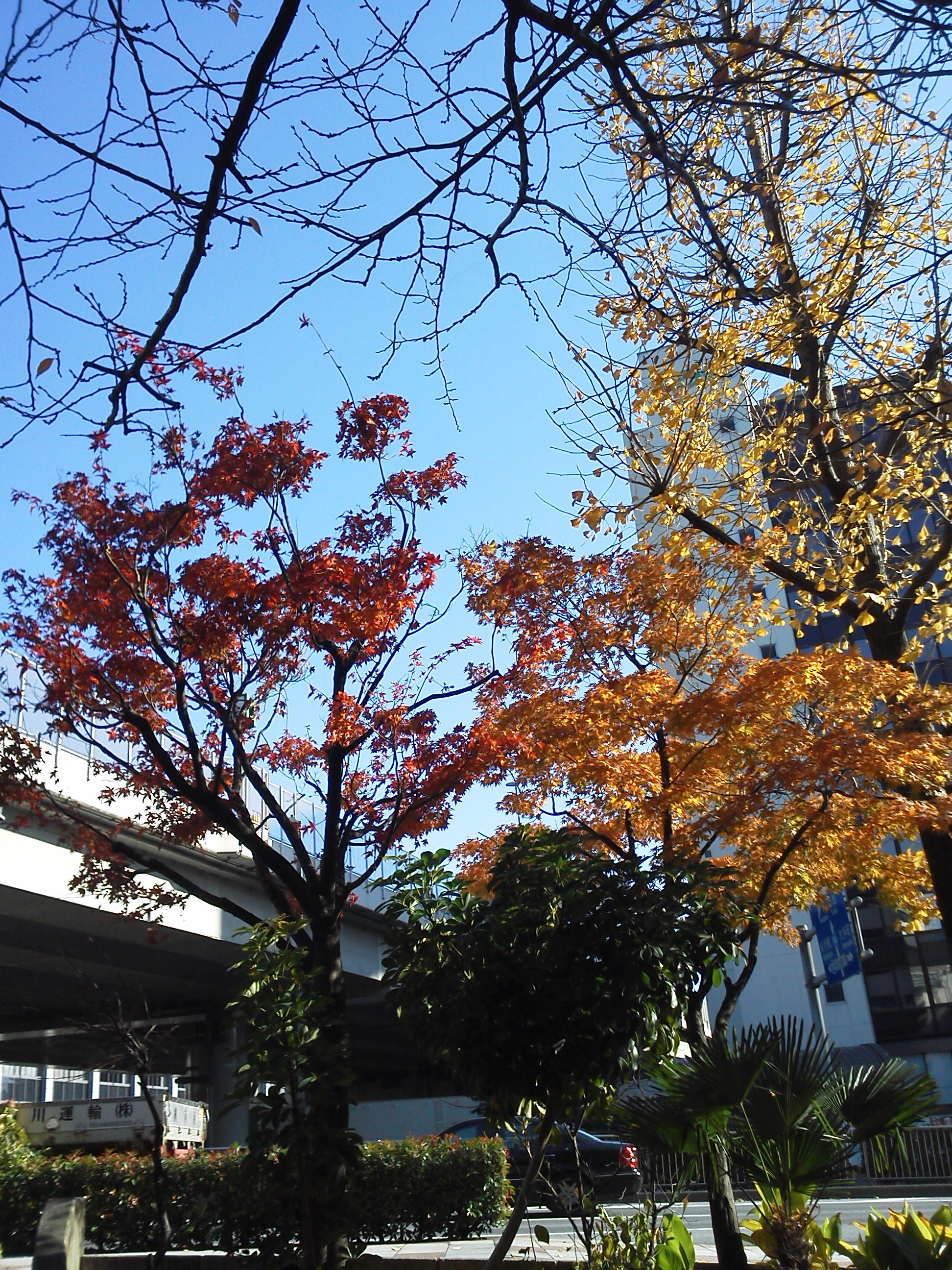 黄葉と紅葉