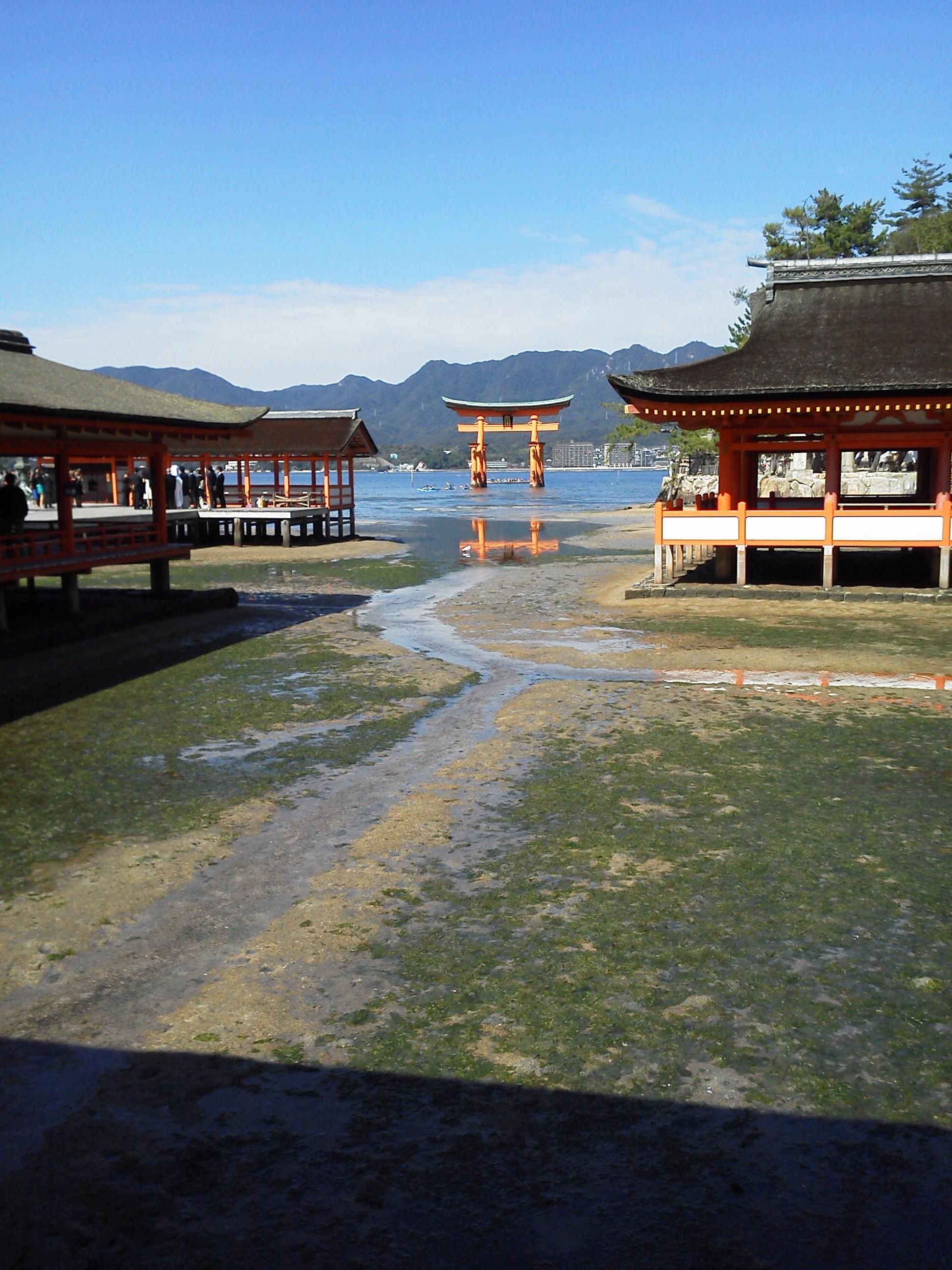 宮島の厳島神社の大鳥居を社殿から
